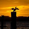 Cormorant at Sunset, Belmar, NJ