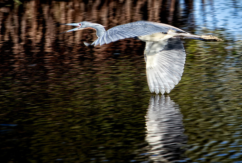 "Angry Heron - Augen 2013<br> <a href=""http://www.grand-cachot.ch/#!49-Greenwood-Kenneth-USA/zoom/c11sa/image1gi2"">Gallery of Grand-Cachot-de-Vent: Marais du Monde 2013</a>"