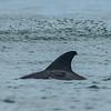 Dolphin Feeding 8/7/16