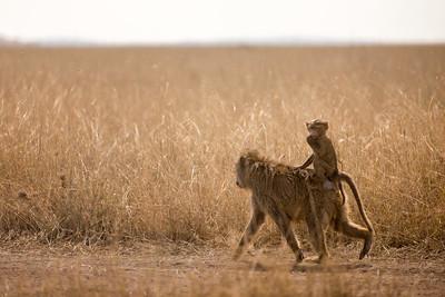 Riding Baboon - Tanzania