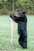 Bear #4 standing