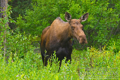 Moose4d