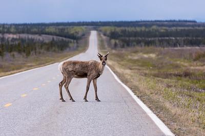 Dalton Highway; Alaska
