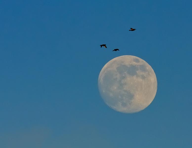 Lunar Flyby