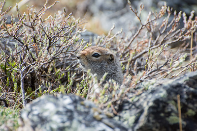 Denali National Park and Preserve; Alaska
