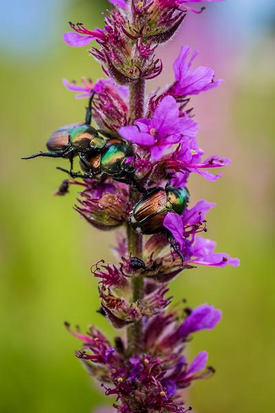 Beetle Boogie