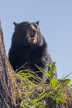 Bear #5