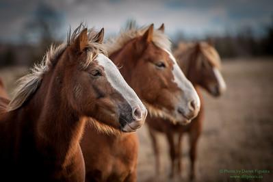 """""""Horses Milford PEC"""""""