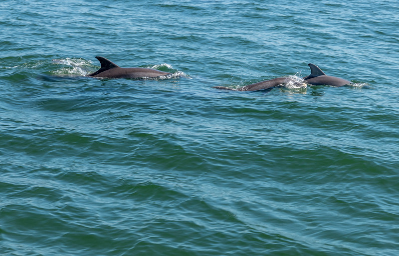 Dolphins-007