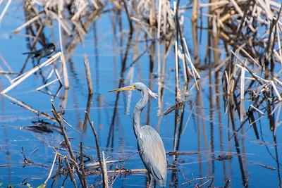 Savannah National Wildlife Refuge; Hardeeville, SC