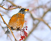 No More First Robin of Spring