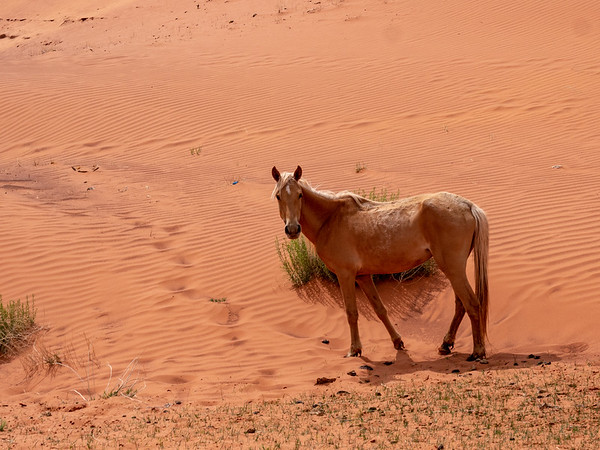 Horse at Sands Spring