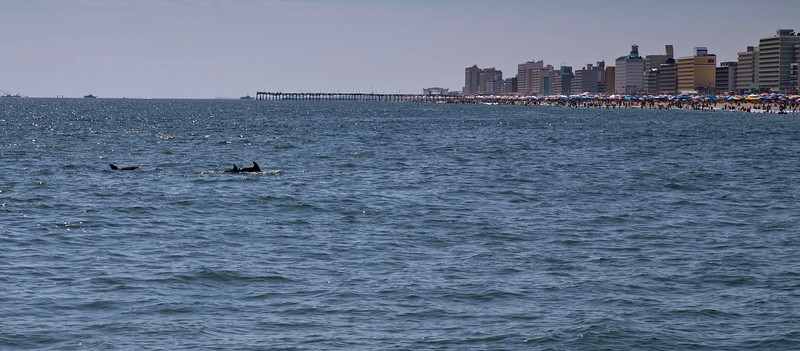 Dolphins-033