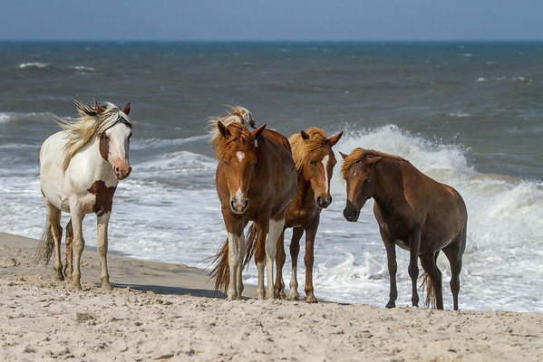 Assateague quartet