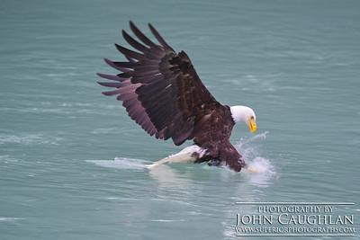 Eagle2l