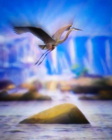 Heron at Conowingo