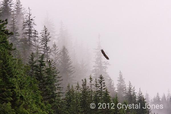 Eagles near Valdez