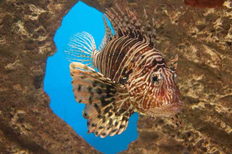 281 - Lionfish