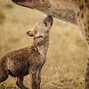 Hyenas bonding