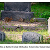 Rabbits at Bethel United Methodist, Tottenville, Staten Island