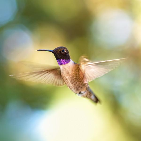 Flying Nectar Faery