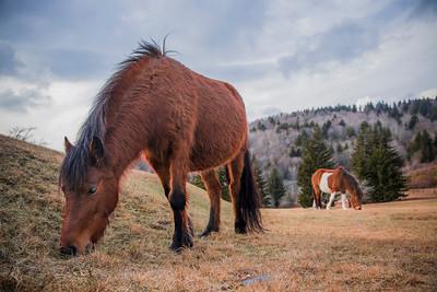 Wild Ponies Enjoy Dinner
