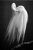Egret Bow