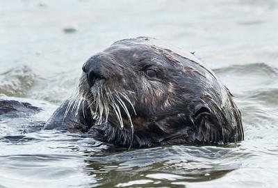 Otter II Moss Landing