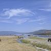White rhinoceros (Ceratotherium simum) and zebra on the shores of Lake Nakuru, Kenya, East Africa