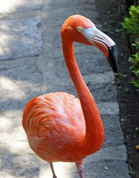 Flamingo Friend at Las Mananitas