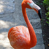Flamingo Friend at Las Mananitas
