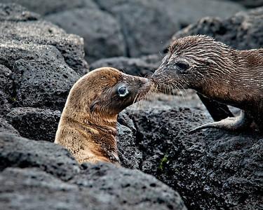 Sea lion buddies- Isla Santa Maria (Floreana)