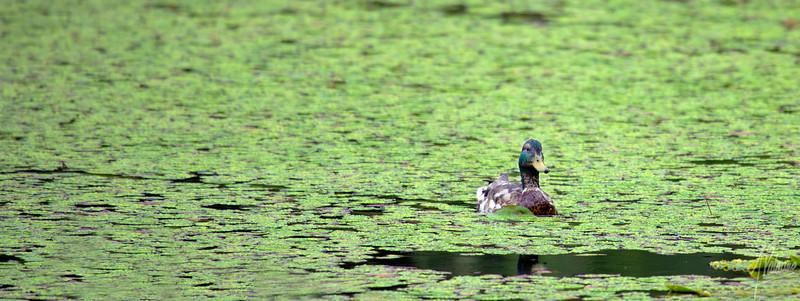 Green at Yellow Lake
