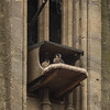 Two Peregrines this time at Bath 4/6/16