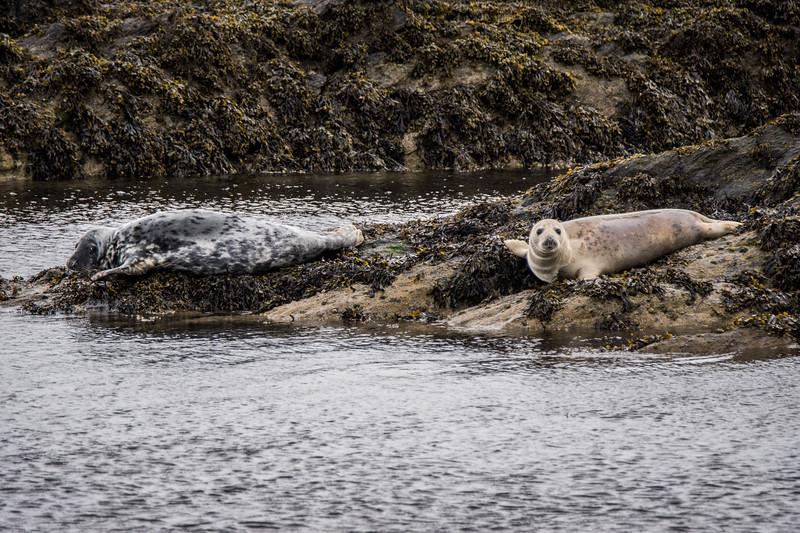 Unst Seal