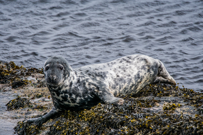 Unst Seal