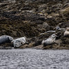 Unst Seals