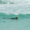 Seals on Westray
