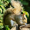 Squirrel, Lower Moor farm, Cotswolds