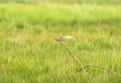 Aust Birds 30/4/17