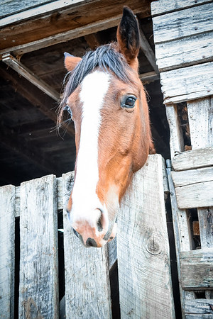Horses-013