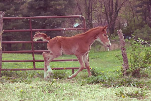 Horses-019
