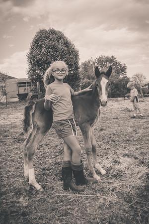 Horses-018