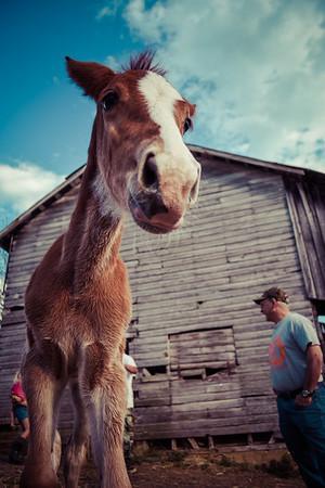 Horses-005