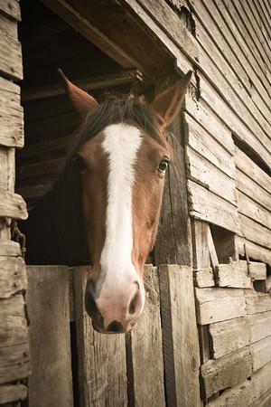 Horses-003