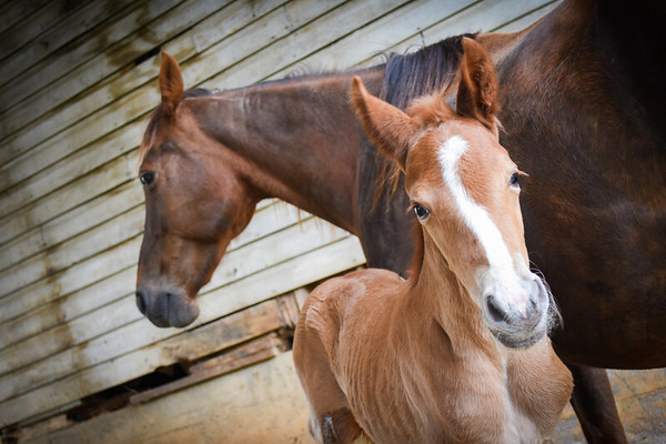 Horses-011