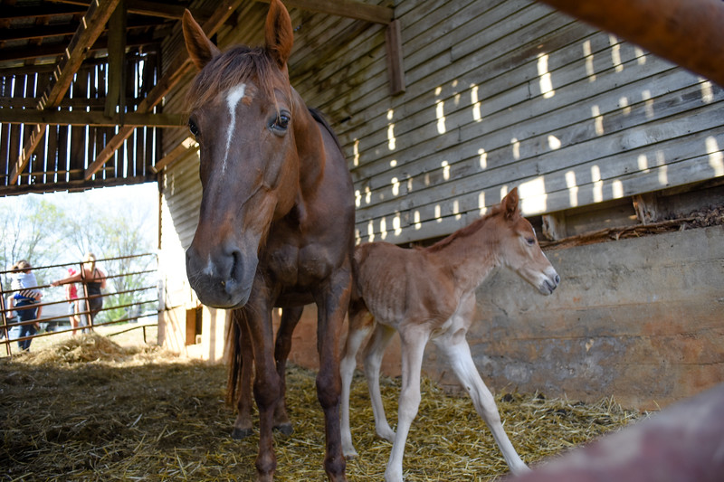 Horses-008