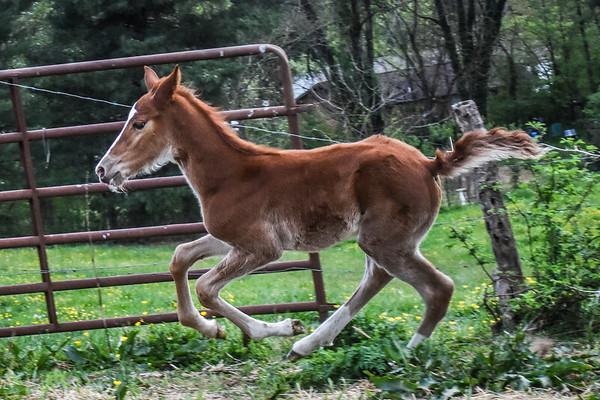 Horses-022