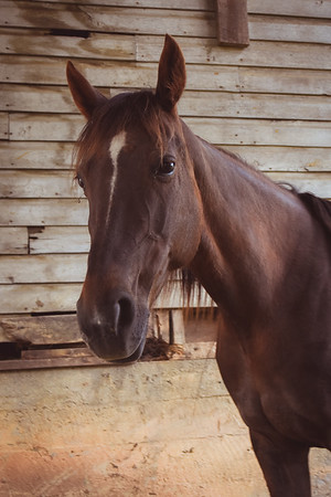 Horses-012