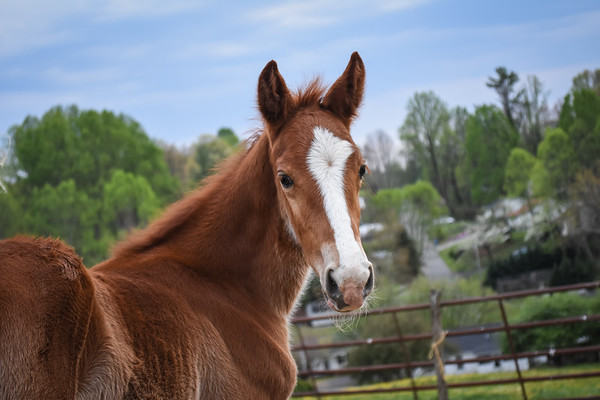 Horses-020